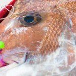 snapper snatcher,fishing rig, wholsale rig