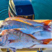 snapper fishing finding reds