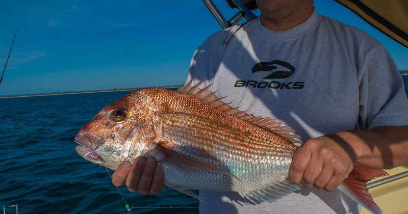port phillip bay snapper fishing