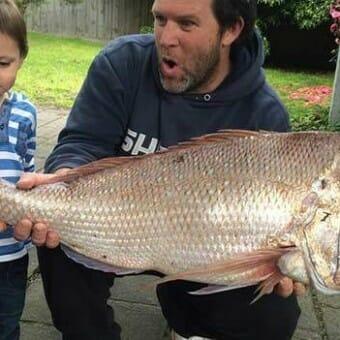 snapper port phillip bay , melbourne snapper, Victoria fishing , snapper