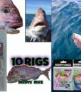 Snapper Snatcher Rigs Pre Made Fishing Rig Tied On a Paternoster