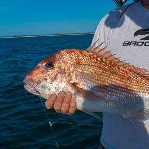 Snapper Fishing Tips Reports Tackle By Reedy's Rigz Shop