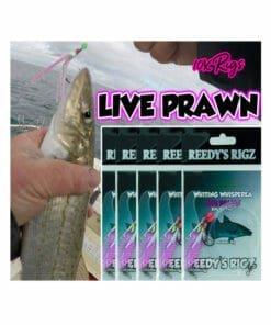 whitting rig, fishing rig, catching whitting , paternoster rig, bait fishing