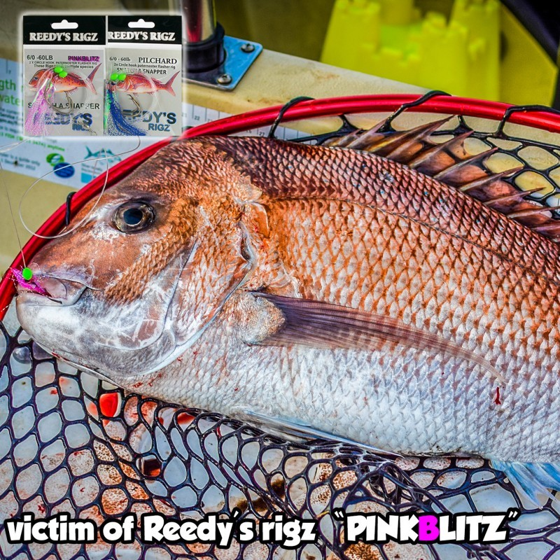 bottom fishing rig , reedys rigz, SNAPPER SNATCHERS