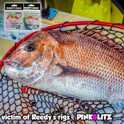 bottom fishing rig , reedys rigz, SNAPPER SNATCHERS