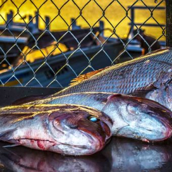 Fishing-For-Snapper-What-Baits-Rigs-and-rods-should-i-fish