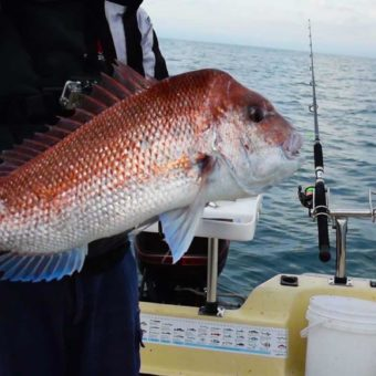 snapper fishing ,