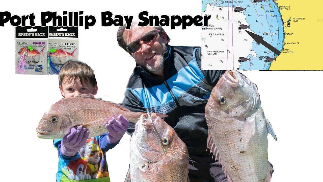 port phillip bay fishing guide pdf