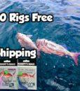snapper-snatchers-reedy's-rigz
