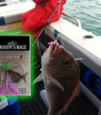 fishing report Melbourne Snapper frankston Mornington carrum
