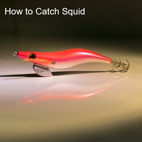 squid fishing, how to catch squid, squid jigs, tackle,