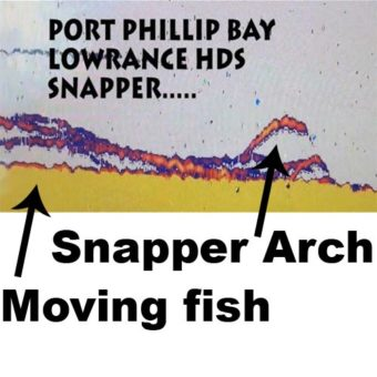 snapper on fish finder, hds snapper, fish finder snapper,port phillip bay snapper