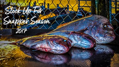 Snapper Season 2017, Fishing , Snapper , Reedy's Rigz , Pilchard , Squid