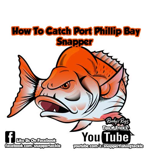 how to catch a snapper in port phillip bay