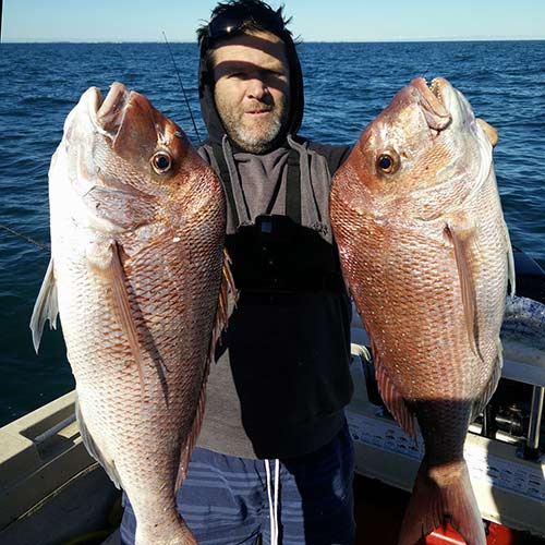 snapper, february reds , snapper report port phillip bay