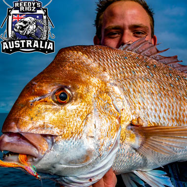 snapper rigs , ultra rigs , flasher rig, bait rig , snapper , snapper snatchers, flasher rig