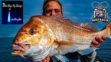 snapper, reedys rigz, snapper rig,flasher rig, bait fishing ,