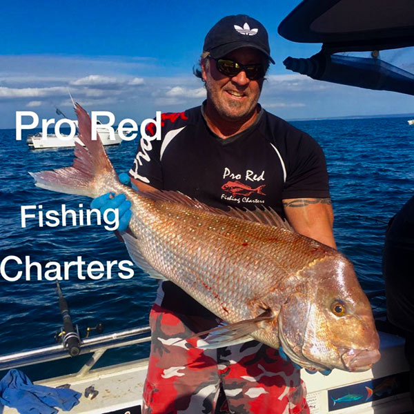 pro red fishing , charters, melbourne charters, port phillip bay snapper, fishing,