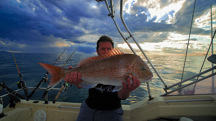ultra rig, reedys rig, snapper , australian snapper , snapper fishing ,fishing victoria