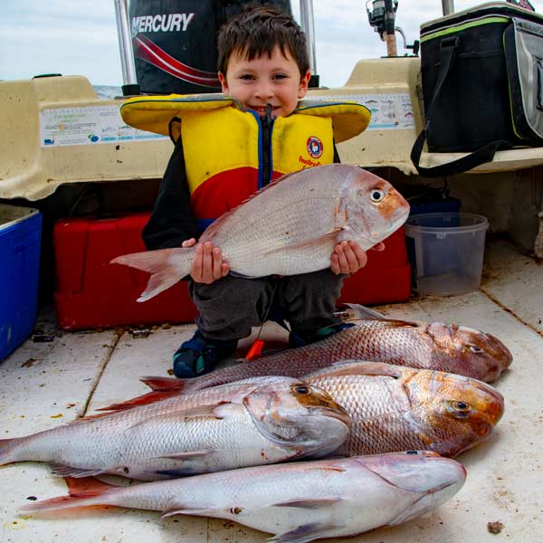 snapper report melbourne, fishing report melbourne , port phillip bay snapper report, snapper