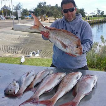 snapper report melbourne, fishing report , reedys rigz, ultra rig,snapper
