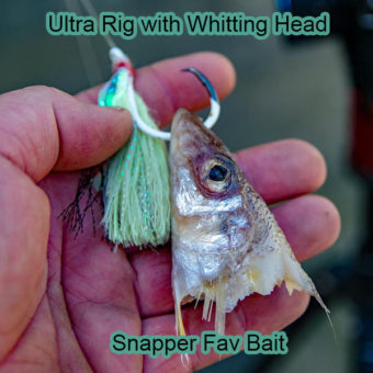 baiting circle hook, snapper favourite bait , silver whitting head, snapper bait, ultra rig , how to bait hook ,tie fishing rig