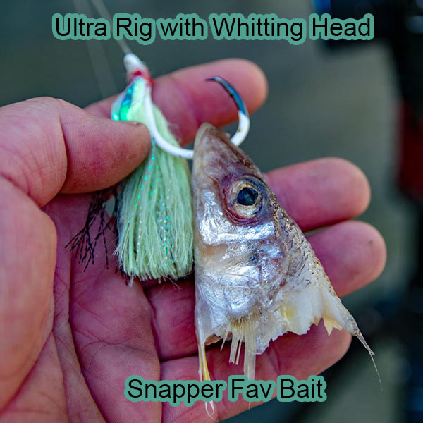 baiting circle hook, snapper favourite bait , silver whitting head, snapper bait, ultra rig , how to bait hook , nsw snapper