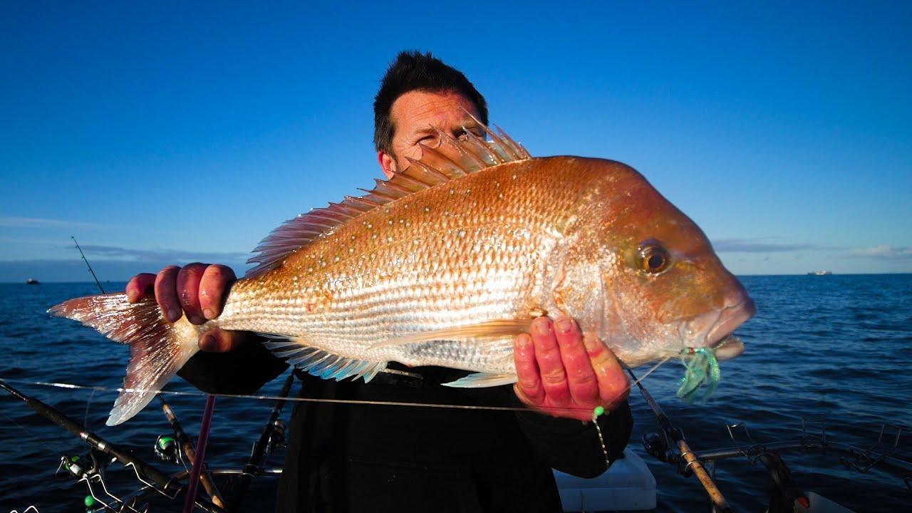 snapper, gps maps, fishing