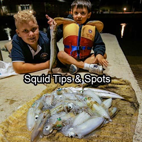 squid spots frankston, squid, how to catch port phillip bay squid