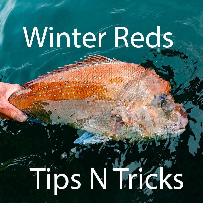 winter-reds-port-phillip-bay-report-tips-tricks