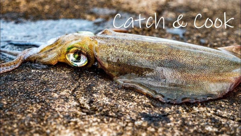 catch & cook squid, fishing squid, egi jigs,