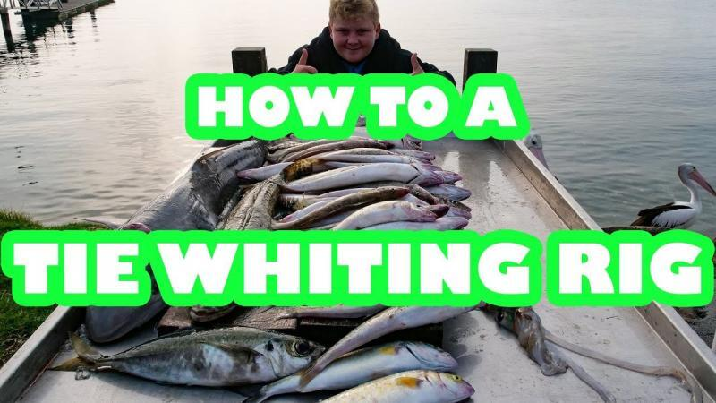 whiting rigs, how to tie , fishing rig, king George rigs, tinganoster, whiting rig diagram