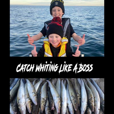 how to catch whiting, king george whiting, how to clean king george whiting, king george whiting best