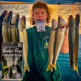 whiting rig,king george whiting,kgw,fishing rig,whiting rigs,